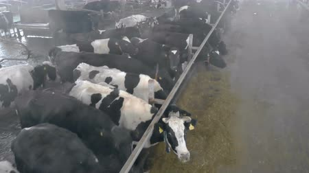 навес : Herd of cows in a byre, close up.