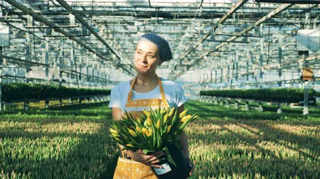 floriculture : One smiling woman carrying a bucket with tulips in a greenhouse.