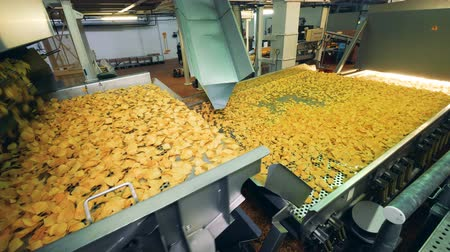 almidon : Big conveyor full of potato chips at a food prodcution facility.