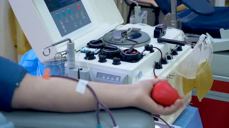 csőrendszer : Transfusion machine collects blood plasma from a donor.