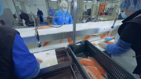 処理された : Pieces of salmon are getting processed by factory employees