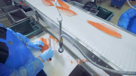 segurelha : Worker is cutting off extra pieces of a salmon