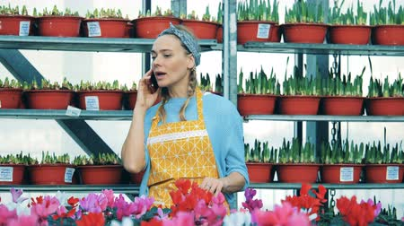 seedlings : Greenhouse worker speaks on the mobile phone while standing near cyclamen. Stock Footage