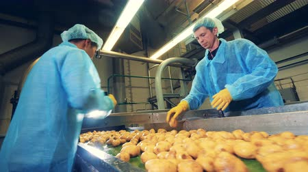 крахмал : Men cut potatoes on a modern conveyor at a food factory.