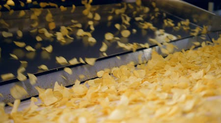 крахмал : Fried potato chips falling into industrial conveyor at a factory.