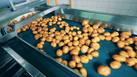 lavado : Industrial transporter is displacing wet potatoes