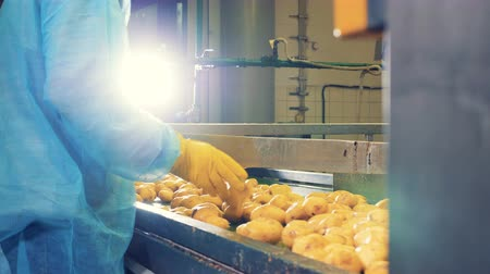 mekanizma : Potatoes are getting sorted and cut in halves by the workers