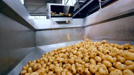 collected : Industrial container is getting filled with potatoes