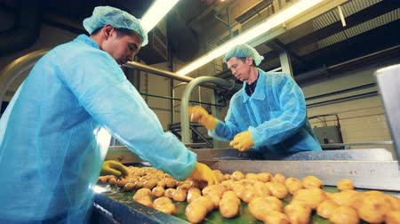 čištěný : Potato tubers are getting processed by two workers Dostupné videozáznamy