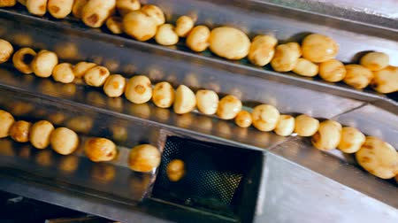 čištěný : Tubers of potato are getting sorted automatically Dostupné videozáznamy