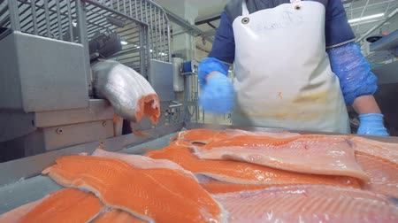tisztított : Skins of salmon are getting sorted after emerging from the factory machine