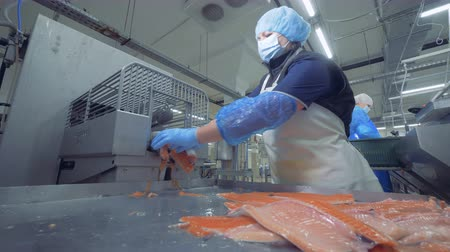 skins : Sorting process of fresh salmon trunks. Fish factory.