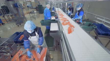 industrial fishing : Fish factory unit with staff sorting and processing salmon Stock Footage