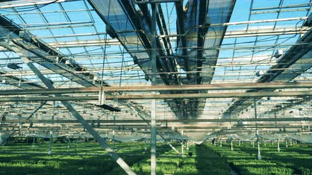 massif de fleurs : Spacious greenhouse with plenty of seedlings