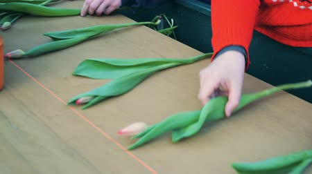 Workers hands are adjusting tulips on the moving belt Stockvideo