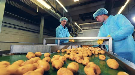 hlíza : Agricultural workers are cutting potatoes in the factory Dostupné videozáznamy