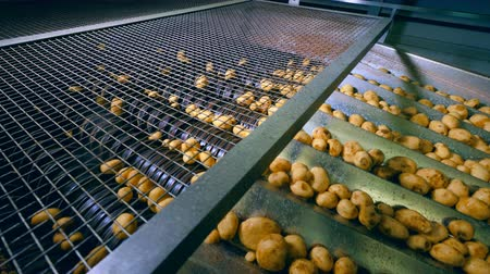 tayın : Metal mechanism is transporting and cutting potatoes Stok Video