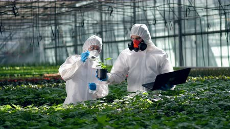modification : Agriculture, herbicide, chemicals in farming. Plants are being chemically processed by two farmers