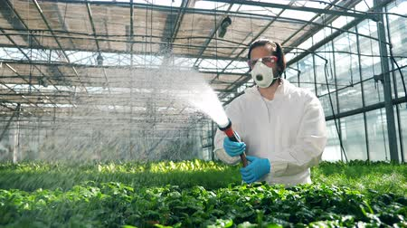 herbicides : Hothouse worker is watering plants with chemical liquid. Agriculture, herbicide, chemicals in farming. Stock Footage