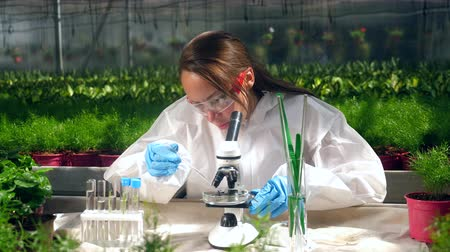 herbicides : Greenery specialist is working with a microscope. Genetic modification concept.