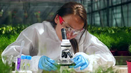 herbicides : Female agronomist is researching pesticides in the glasshouse. Genetic modification concept.