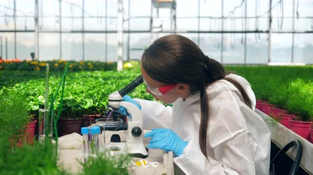 pesticidi : Female specialist is analyzing a chemical probe under microscope. Agriculture, herbicide, chemicals in farming.