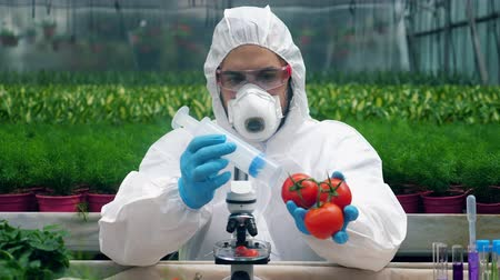 herbicides : Greenery worker is pumping vegetables with chemicals. Genetic modification concept. Stock Footage