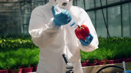 herbicides : Bioengineer is inflating liquid chemicals into red pepper Stock Footage