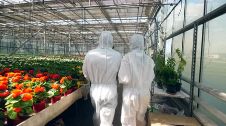 botanikus : Two botanists walk in a glasshouse, talking to each other.