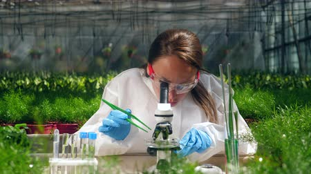 botanikus : Female biologist works with a microscope in a glasshouse.
