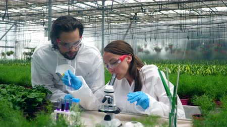 biologa : People work with a microscope in a greenhouse, checking plants.