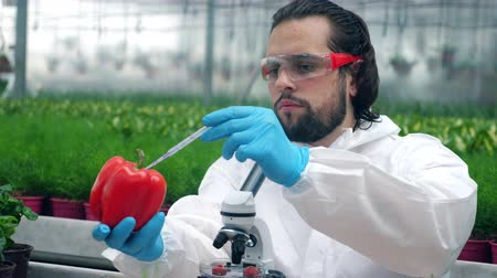 pipette : A biologist checks a ripe bell pepper, working with a pipette.