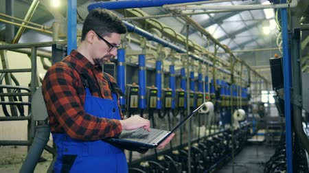 beef stock : Worker looks at machines in a milking facility, typing on a laptop. Stock Footage