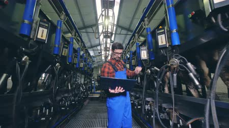milking : Male worker checks equipment in a milking facility, walking in a barn.