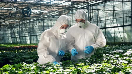ropa de trabajo : Two biologists are talking and observing a flower in the hothouse