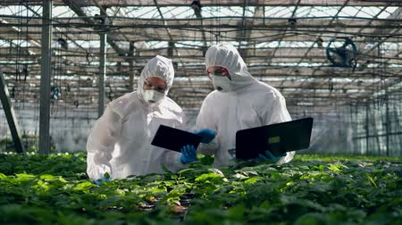 herbicides : Greenery and two agronomists working on laptops and talking