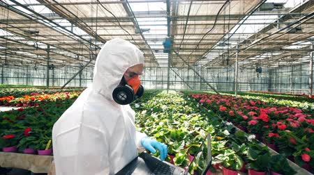 prejudicial : Male scientist is walking along the greenhouse with a laptop