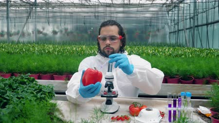 herbicides : Male agronomist is filling red pepper with chemical liquid