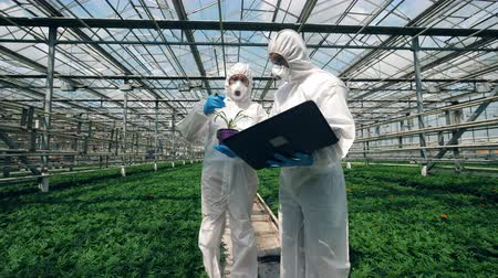 herbicides : Biologists are discussing and analyzing a plant