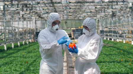 herbicides : Two agronomists are filling pepper with chemicals