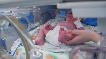 brutkasten : A pediatrician checks newborn baby in incubator. Videos