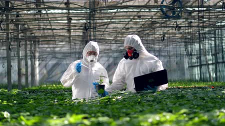 herbicides : Agronomists are fertilizing greenery plants with chemicals