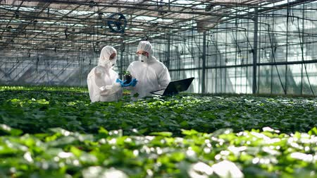 hydroponic : Plants are getting analyzed by two biologists Stock Footage