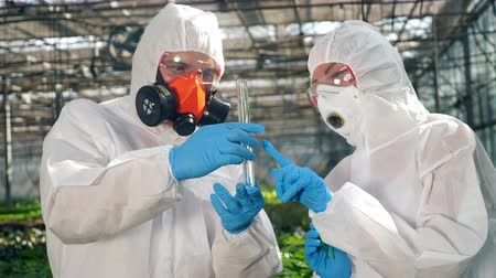 herbicides : A plant in chemical liquid is being observed by two biologists