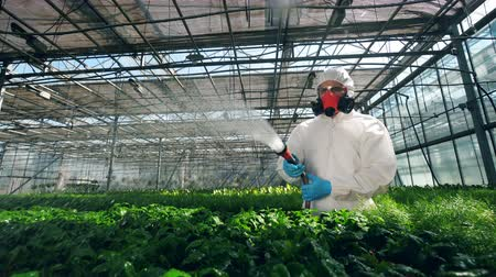herbicides : Green plants are getting chemically fertilized by the scientist