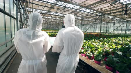 hydroponic : Two agronomists are walking along the greenery in a backside view