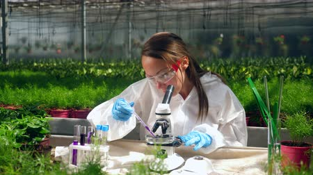 seedlings : Glasshouse worker is using a microscope to test chemicals Stock Footage