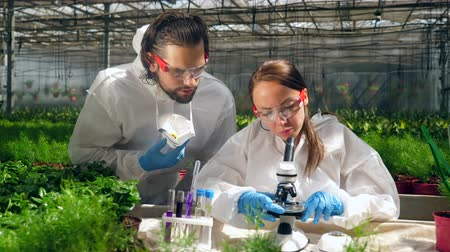 herbicides : Two biologists are holding a research with a microscope