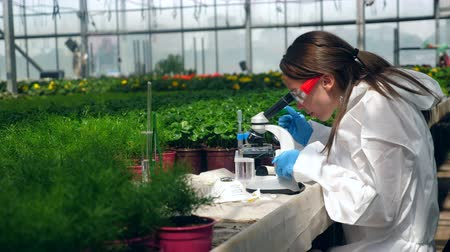seedlings : Female scientist is working with a microscope during plant research