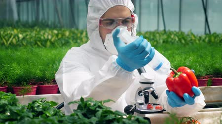 pumping : Greenery worker is filling red pepper with chemical liquid Stock Footage